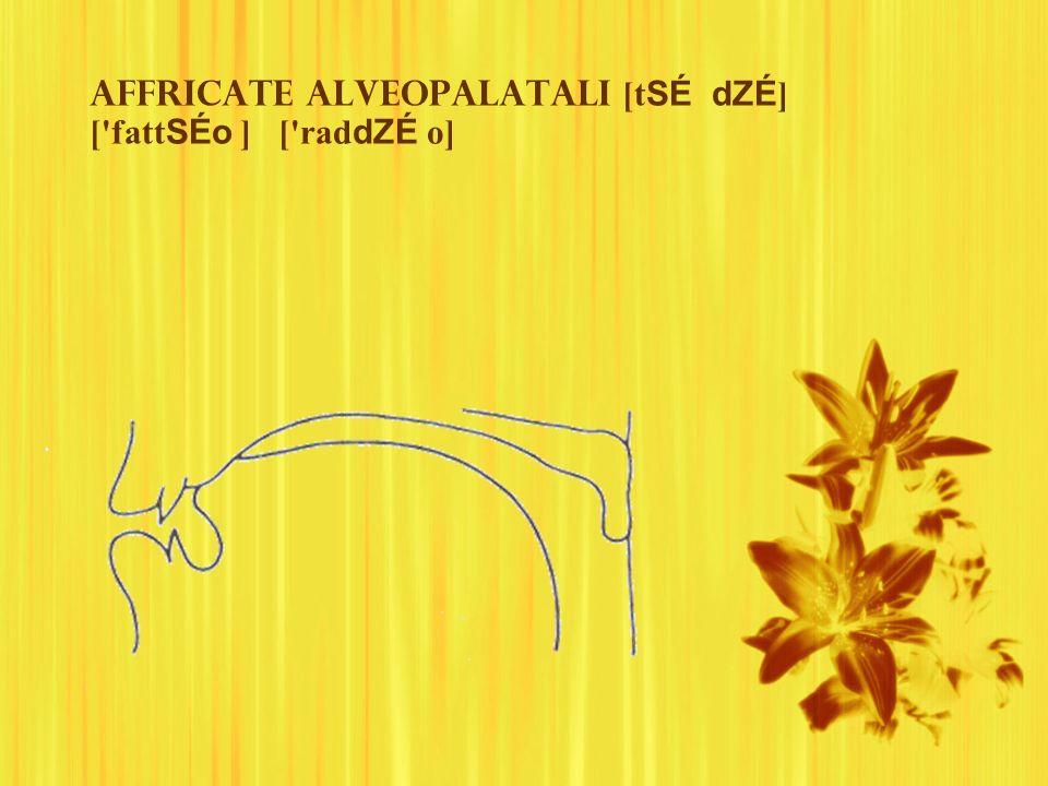 Affricate alveopalatali [tSÉ dZÉ] [ fattSÉo ] [ raddZÉ o]
